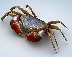 Ilyoplax pingi crab 3D asset