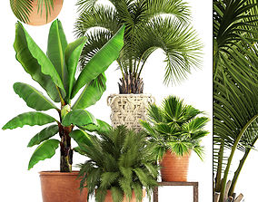 Collection of plants 3D model