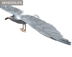 Seagull 3D