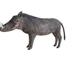 Warthog 3D asset rigged