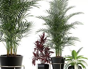 Plants collection 89 3D model