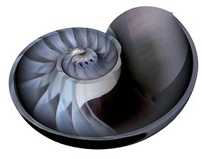Spiral Nautilus Shell 3D