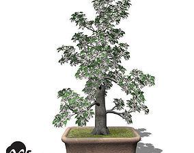 3D XfrogPlants Apple - Bonsai
