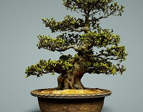 3D asset VR / AR ready Bonsai Tree