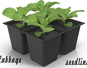 3D model Seedlings of cabbage