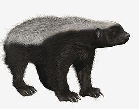 3D model Honey badger with realistic fur