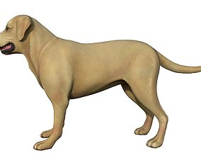 3D model Labrador Retriever