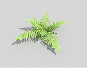 low poly fern 3D model
