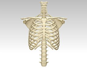 3D printing and downloading of human sternum structure