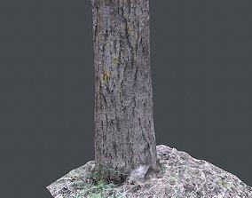 small tree 3D asset