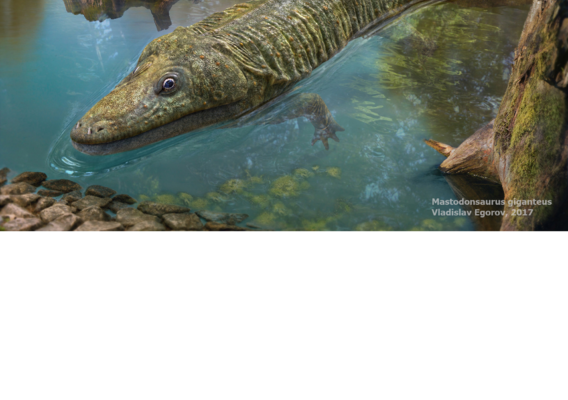 Mastodonsaurus giganteus