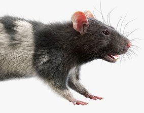 3D model Rat Fur Spotted