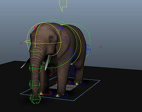 Elephant texture 3D model