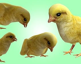 Chick lowpoly 3D asset