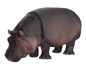 Hippo 3D model low-poly