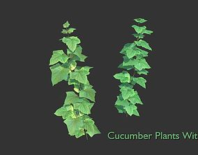 Cucumber Plant With Fruit 3D model