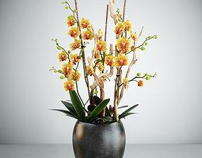 3D Orchid 8