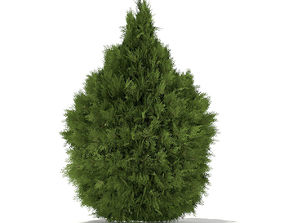 3D model White Cedar Thuja occidentalis 2m 3