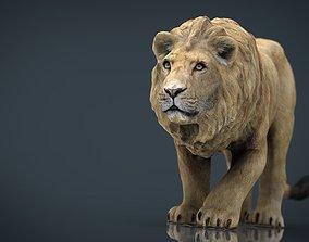 3D asset Realistic Lion