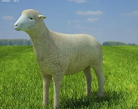 3D model Sheep Ovis aries