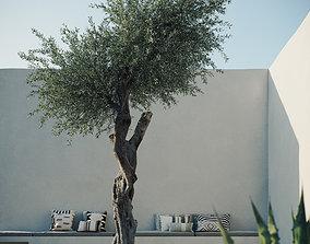 tree Olive Tree 3D model