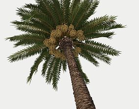 Palm tree - Closer to reality 3D model