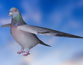 3D model pigeon - bird