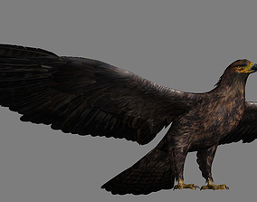 VR / AR ready Eagle Realistic 3D Asset