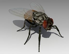 3D model low-poly Fly Animated
