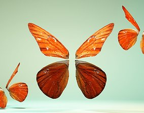 Butterfly The Orange Albatros 3D asset
