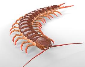 Centipede Rigged 3D model