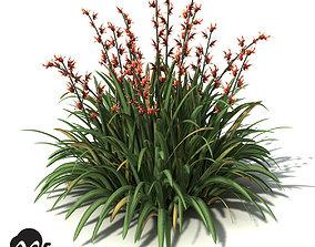 XfrogPlants New Zealand Flax 3D model