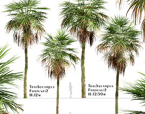 Set of Trachycarpus Fortunei or Chinese 3D model 2