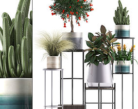 Collection of potted plants 3D model