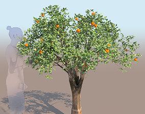 3D Citrus reticulata mandarin tree young