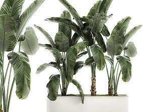 3D Banana in a white flowerpot for decor and interior 1