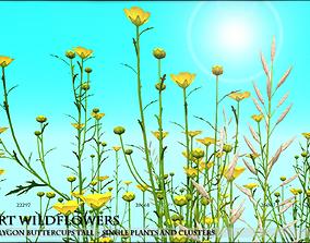 Low Polygon Wild Tall Buttercups Flowers - Wild 3D asset