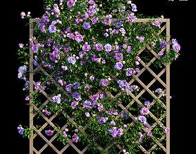 Rose plant set 14 3D model