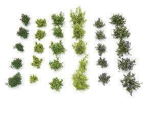 3D model Realistic Garden Shrub 3