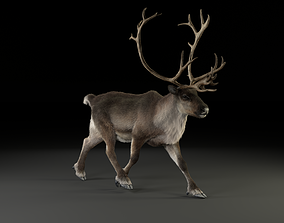 3D model animated Male ReinDeer