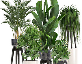 3D model raphis Collection Exotic plants