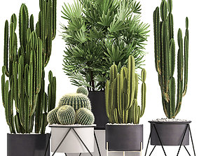 3D cactus Collection of Exotic Cactus Plants 8