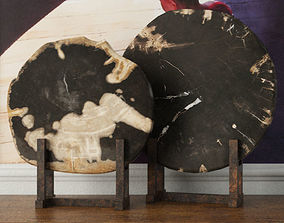 Black Petrified Wood Slices 3D