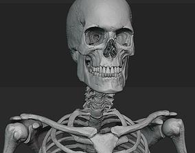 Male skeleton sculpt 3D