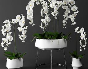 3D Orchid set