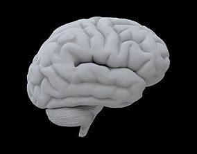 3D model neurology Brain