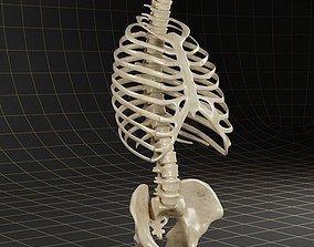 3D model Anatomy skeleton pelvis spinal column ribs