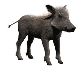 3D model Warthog baby with realistic fur