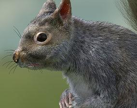 squirrel 3D model animated