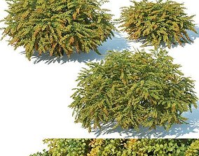 3D model Berberis Thunbergii Nr8 Green Carpet XL 3 sizes